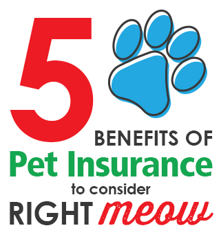 5 benefits of pet insurance to consider right meow